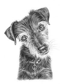 pencil-drawings-of-dogs