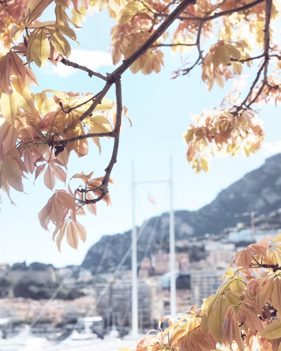 Mon Monaco        hellip